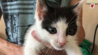 Petit bonheur: Moïse, le petit chat sauvé des eaux d'une rivière de Vétroz, se porte bien grâce à son ange gardien