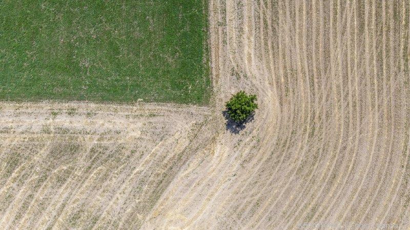 Agriculteurs pas égaux face à la sécheresse: mauvaise pour le fourrage et les cultures maraîchères, plutôt bonne pour la vigne