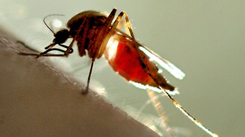 Piqûres: vous êtes la cible privilégiée des moustiques ? On vous explique pourquoi