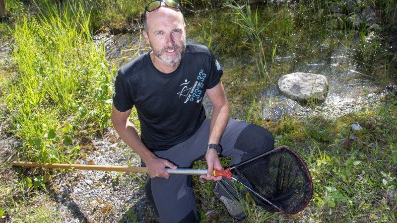 Flavio Zanini , directeur du bureau d'étude en environnement Drosera, s'apprête à transloquer la vingtaine des sonneurs à ventre jaune de la décharge de Port-Valais.