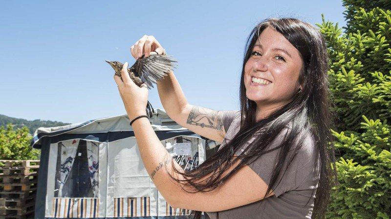 Mélanie Fellay, responsable du centre de soins pour oiseaux Nouvel Envol, en compagnie d'un merle noir juvénile.