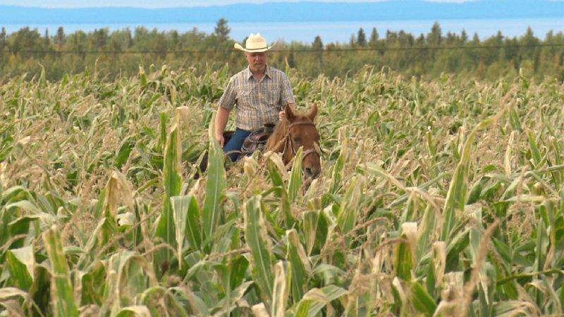 Daniel Reichenbach vit aujourd'hui en Gaspésie dans un large domaine. Il sera à l'honneur de l'émission de la RTS ce soir.