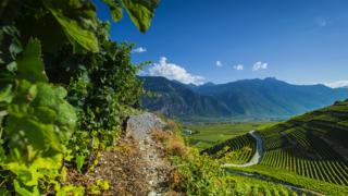 Le Chemin du vignoble se diversifie