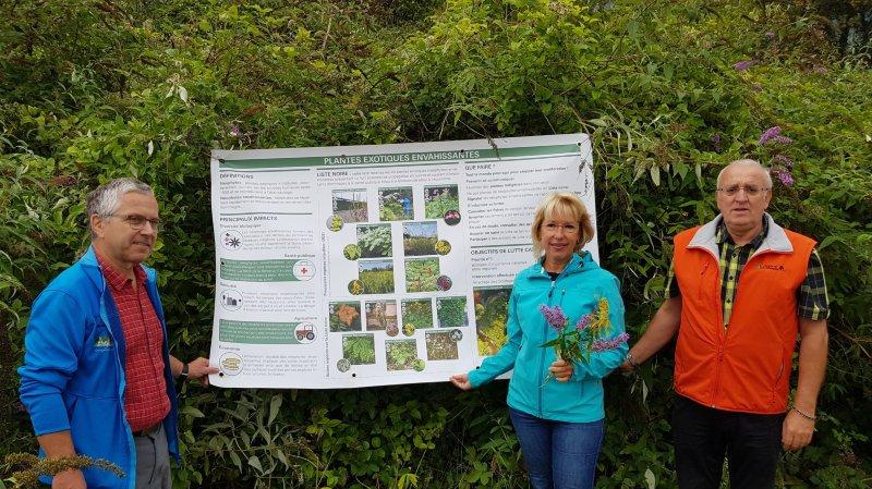 Les Grangettes (VD) comme laboratoire pour lutter contre les plantes envahissantes