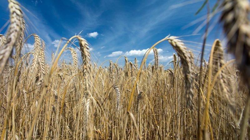 L'agriculture suisse souffre de la sécheresse de ces deux derniers mois.