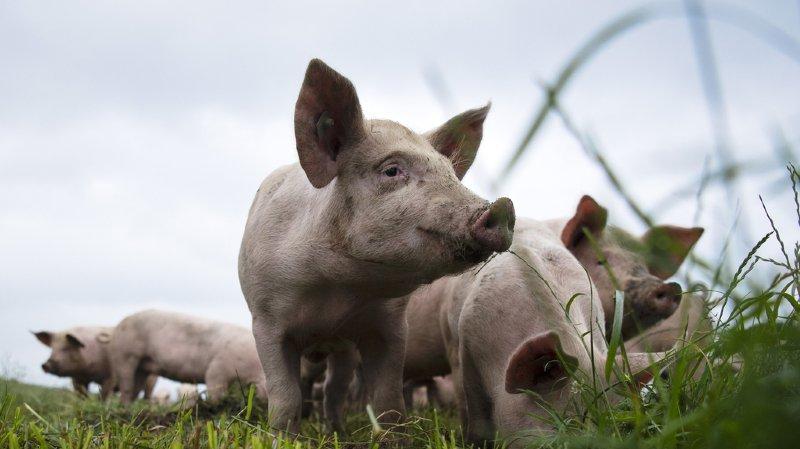 Agriculture: la souveraineté alimentaire au coeur de la votation du 23 septembre