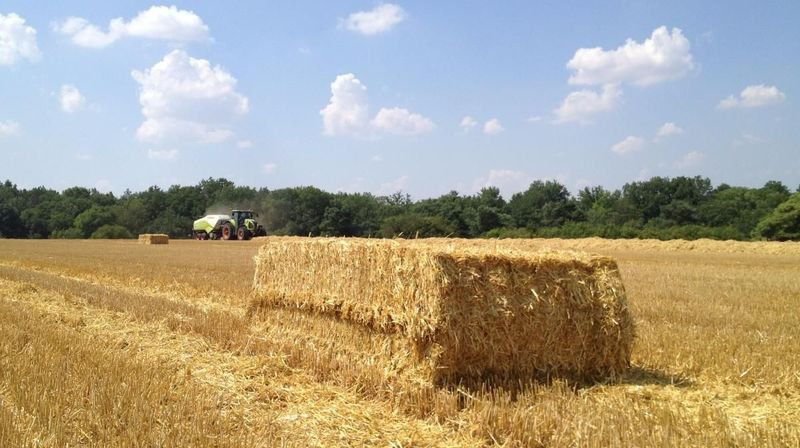 Le monde agricole se bat contre la canicule