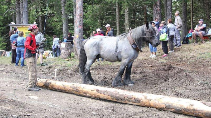 Le public pourra découvrir toute une série d'activités en lien avec l'exploitation forestière.