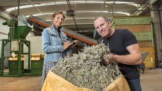 Sembrancher: Valplantes remet ses installations à neuf