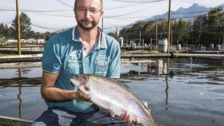 Le Valais bien positionné sur le marché suisse du poisson