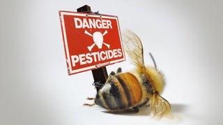 Coup de pouce au Grand Conseil valaisan en faveur des abeilles