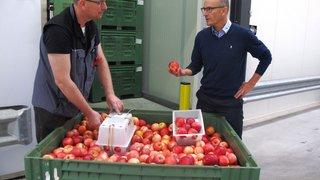 Charrat: Union-Fruits innove dans le stockage des pommes, une première en Valais
