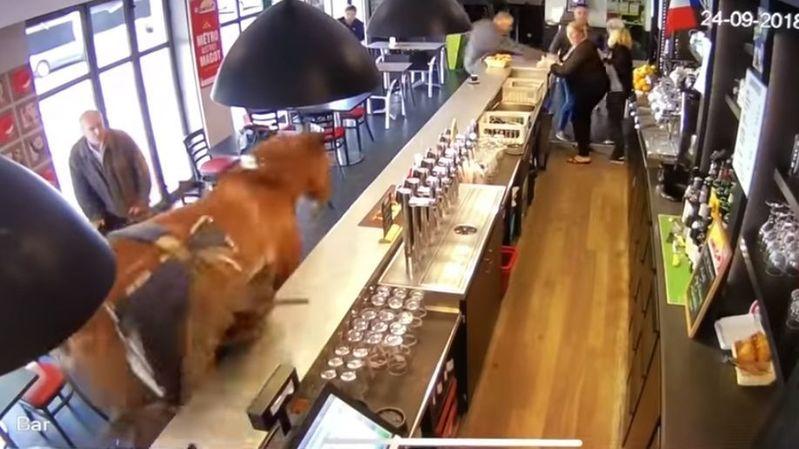 Un cheval s'invite dans un bar PMU et sème la PANIQUE (vidéo)