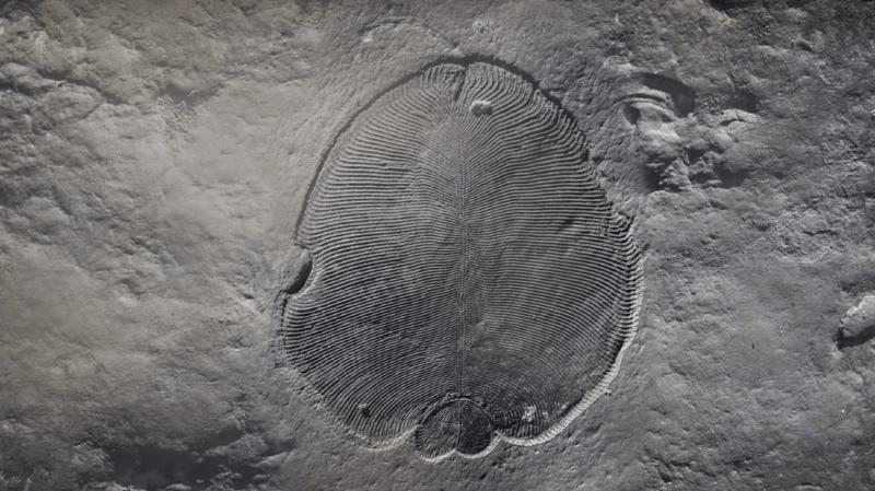 Paléontologie: le plus ancien animal sur terre vivait au fond des océans sans bouche ni intestins