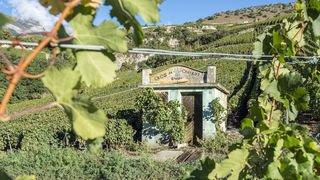 Leurs guérites, c'est notre histoire: découvrez en photos les secrets de ces cabanes au milieu des vignes