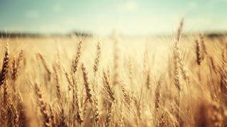 """Non du Valais aux initiatives agricoles: """"un vote de connaisseurs"""", assure Christophe Darbellay"""