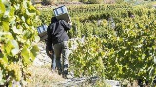 Les initiatives agricoles qui seront votées le 23 septembre divisent le Valais