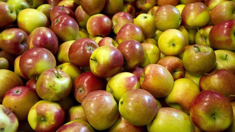 Valais: 6,5 tonnes de fruits et légumes offerts aux élèves des CO
