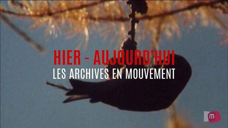 Archives en mouvement: lumières d'automne