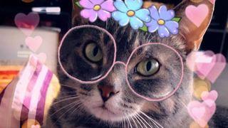 Snapchat lance de nouveaux filtres… pour les chats!