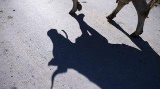 Votations fédérales du 25 novembre: le Conseil fédéral lance sa campagne contre l'initiative pour les vaches à cornes