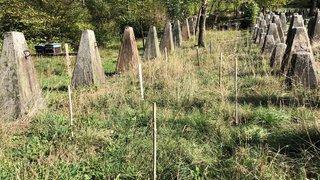 Collonges: 38 plants d'arbustes dérobés sur une parcelle appartenant à Pro Natura
