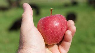 Amendé pour une pomme en Argovie, il est invité à la fête... de la pomme en Valais