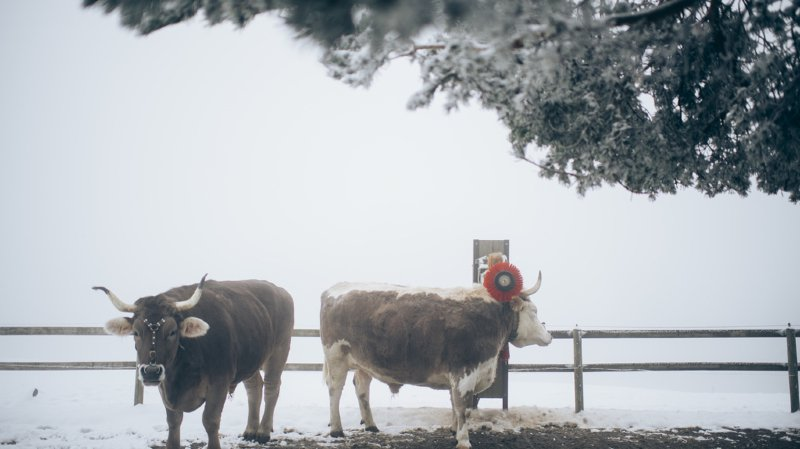 La neige pourrait descendre jusqu'à 1000 mètres d'altitude ce week-end. (illustration)