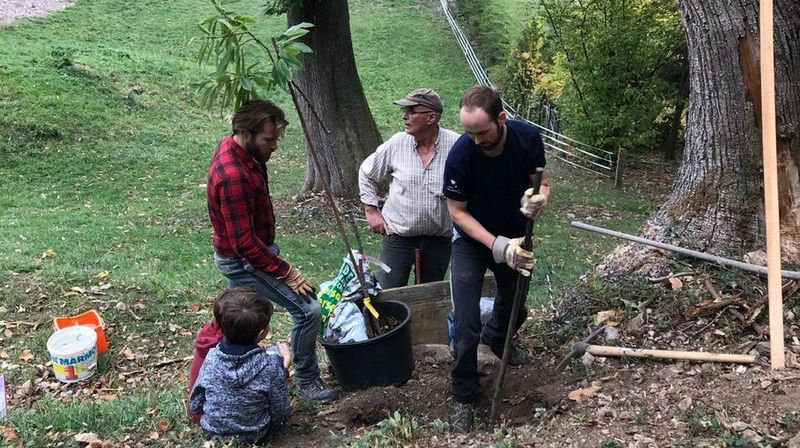 Saint-Gingolph: un avant-projet pour réhabiliter 16 à 20 hectares de châtaigneraie
