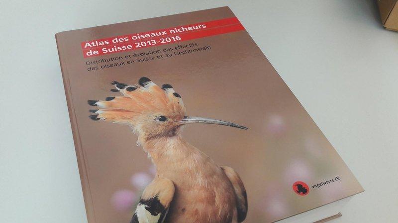 Ornithologie: un Sierrois participe à l'inventaire de tous les oiseaux nicheurs de Suisse