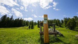 Col du Lein: à la découverte d'un des plus grands pâturages boisés d'Europe