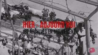 Archives en mouvement: vendanges sous la neige
