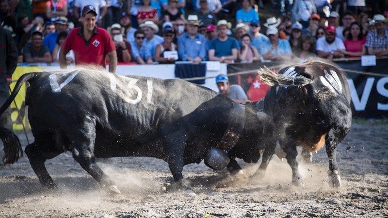 La Vallée d'Illiez organisera la finale 2019 des combats reines