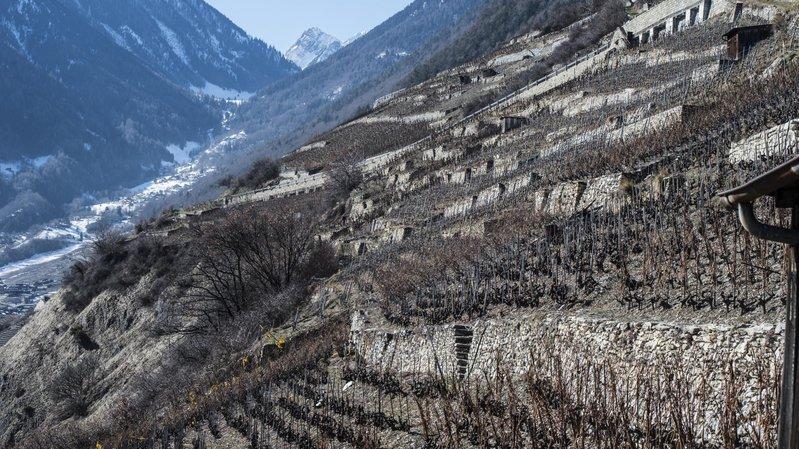 L'art de la construction des murs en pierres sèches inscrit au patrimoine de l'Unesco