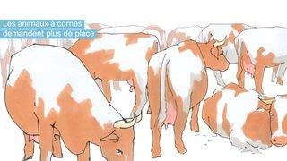 Votations fédérales du 25 novembre: initiative pour les vaches à cornes