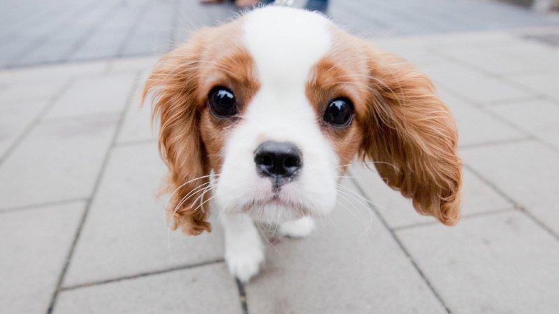 Grande-Bretagne: la vente de chiots et chatons interdite dans les animaleries