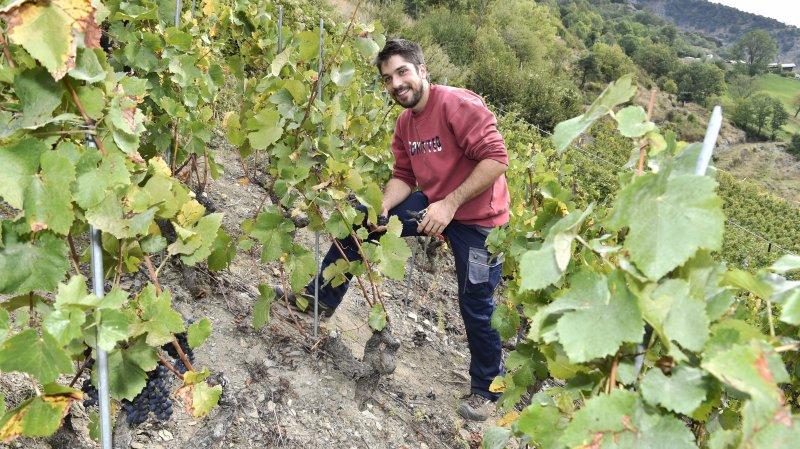 Ces Valaisans qui ont marqué l'actualité 2018: Romain Cipolla, l'encaveur qui a tourné la page du gel grâce à un crowdfunding
