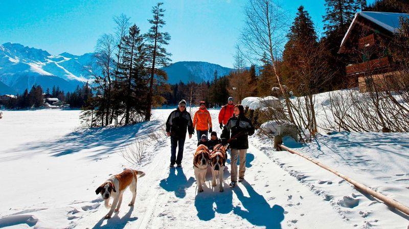 La Fondation Barry propose des balades en compagnie de chiens st-bernard autour du lac enneigé de Champex.