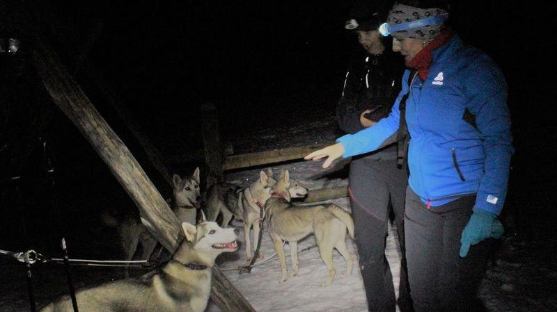 Les balades permettent de mieux connaître les huskies, qui s'avèrent très sociables.