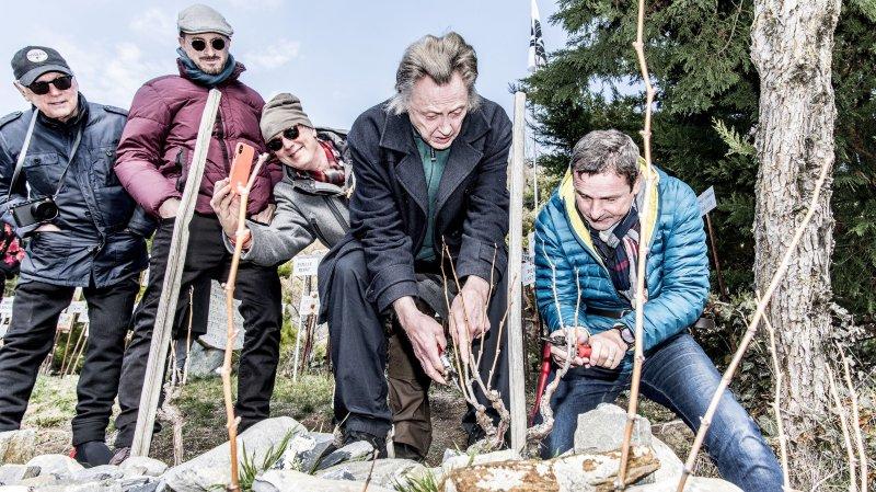Plusieurs personnalités mondiales du cinéma visitent le Valais et viennent tailler la vigne à Farinet dans le cadre des Rencontres 7e Art Lausanne. Ici, Christopher Walken.