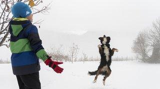 Première neige jusqu'en plaine ce dimanche sur la Suisse