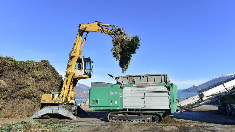 A EcoBois, à Vétroz, les sapins sont utilisés pour faire du compost bio.