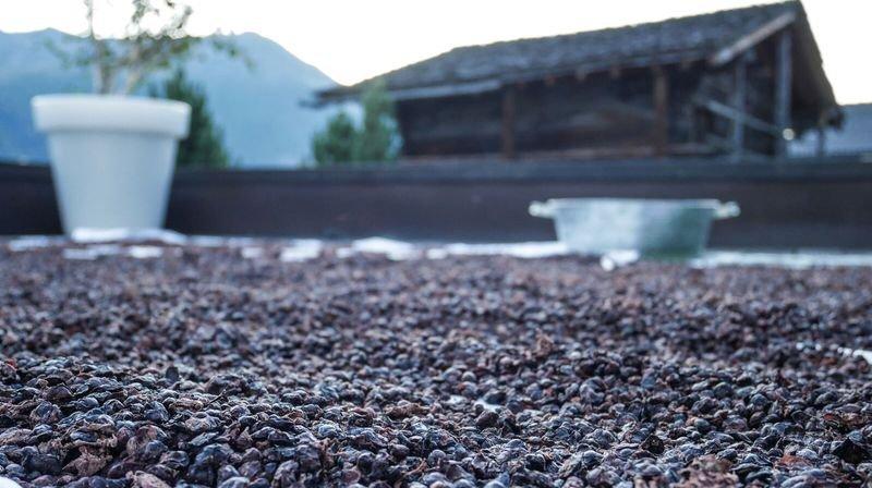 Le marc de raisin a été séché dans un premier temps sur des draps placés sur le toit de la piscine de l'établissement.