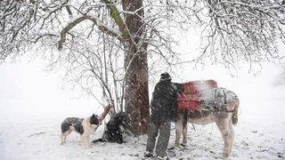 Un berger saint-gallois et ses 800 moutons affrontent la tempête de neige