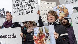 Swiss Expo à Lausanne: antispécistes et barbecue gratuit sous l'oeil vigilant de la police