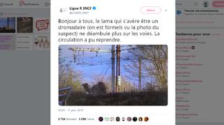 France: un dromadaire en fuite perturbe le trafic ferroviaire près de Paris