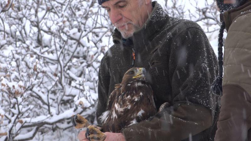 Valais: Axel, l'aigle qui renseigne les chercheurs sur l'emplacement idéal des éoliennes