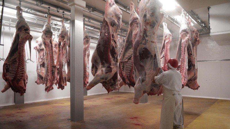 Abattoir de Martigny: débat choc sur une vidéo