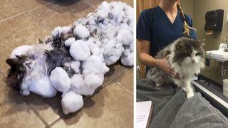 Froid polaire aux Etats-Unis: retrouvé congelé, ce chat est un miraculé