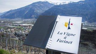 Saillon: le Canard enchaîné sur la vigne à Farinet
